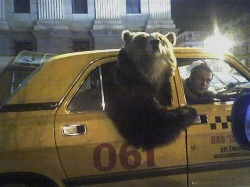 bear,what,taxi,animals