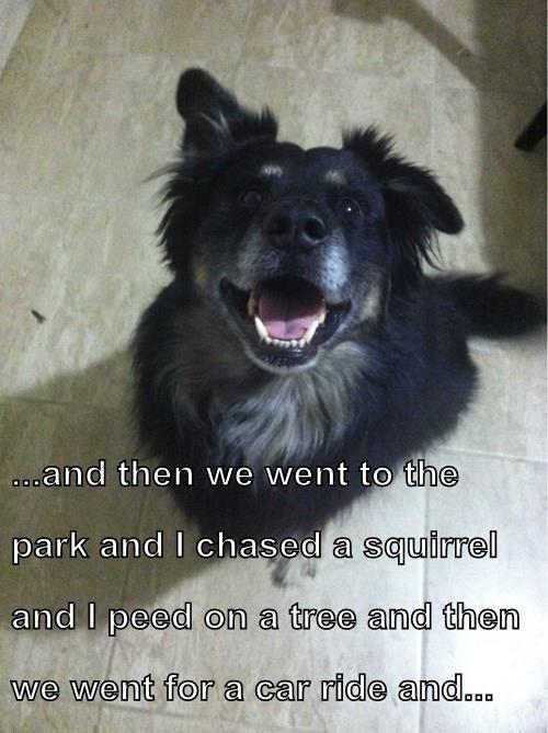 animals dogs - 8391518464