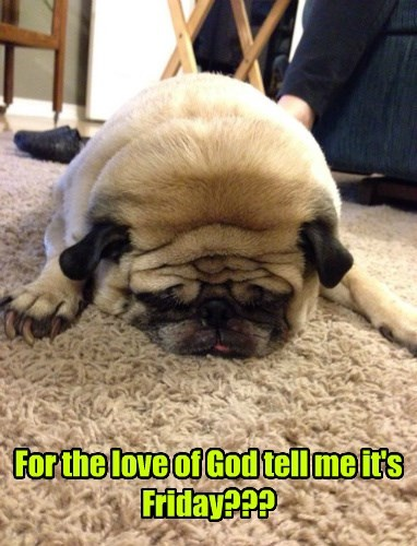 dogs FRIDAY pug loaf - 8391563264