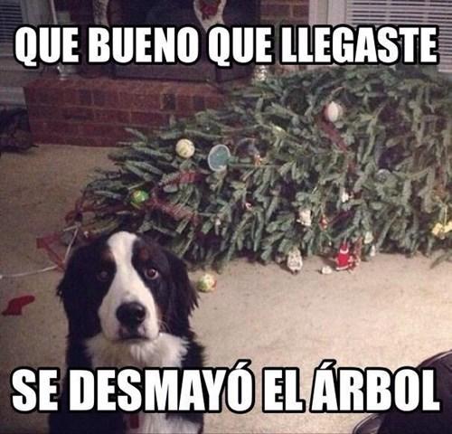 Memes animales perros bromas - 8391792896