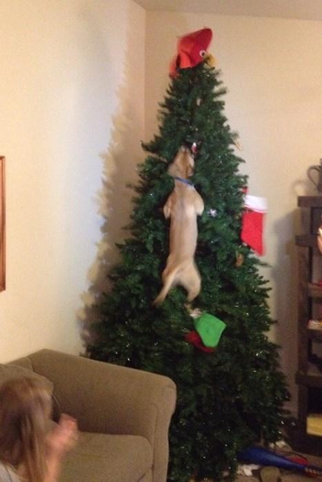 christmas dogs tree - 8391928576