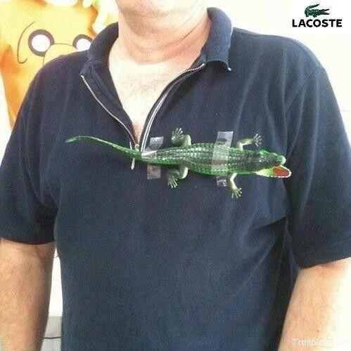 logo alligator poorly dressed lacoste shirt