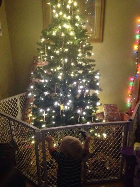 christmas tree,fence,kids,parenting,g rated