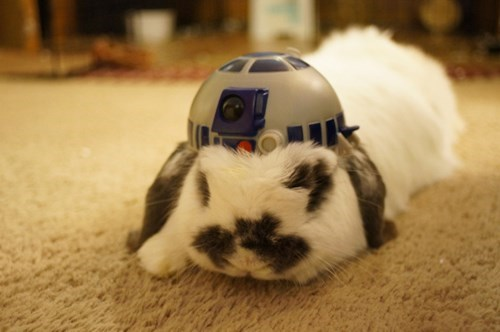 r2d2,star wars,happy bunday,cute,bunny