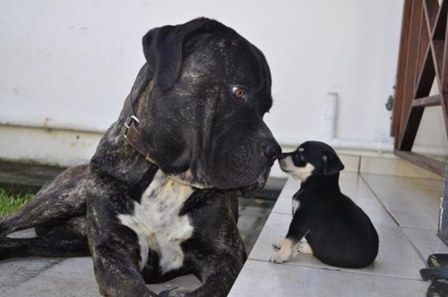 puppy boop cute - 8392173824