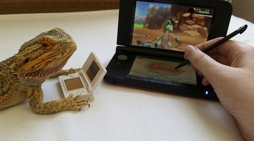 Pokémon,cute,bearded dragon,animals