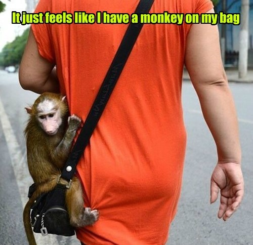 bag,pun,monkey