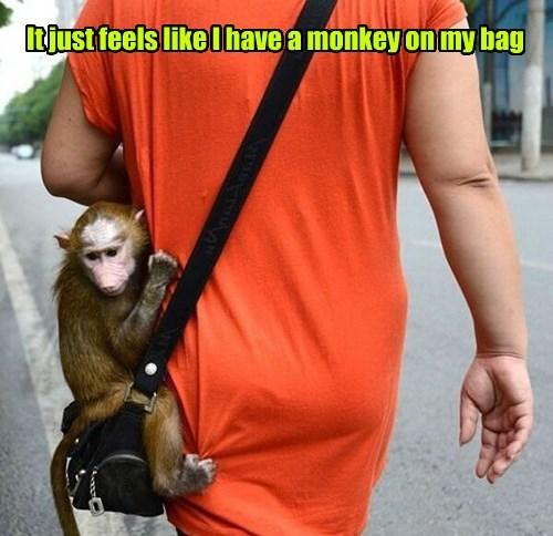 bag,pun,monkey