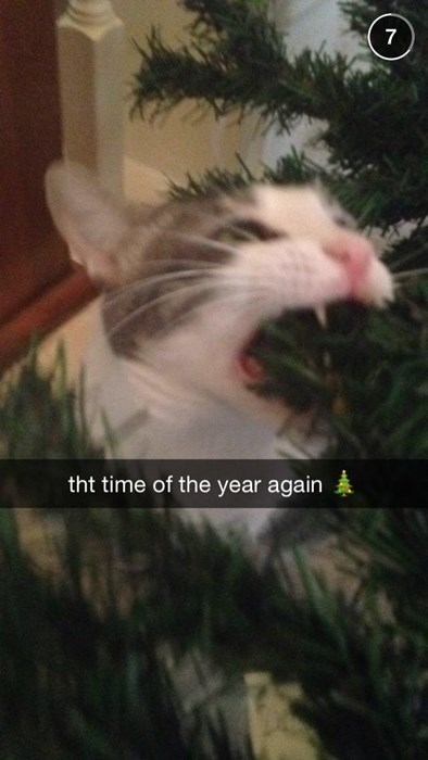 christmas snapchat christmas tree Cats - 8392252672