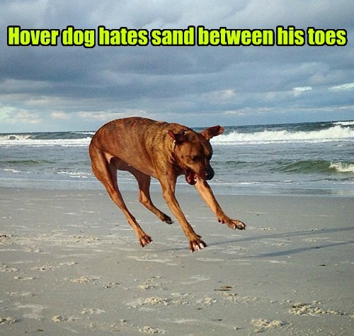 dogs sand hover dog - 8392271872