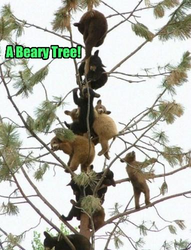 pun bear tree - 8392279808