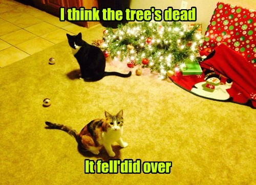 christmas tree,cpr,tree,Cats