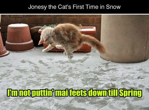 christmas toes snow cold Cats