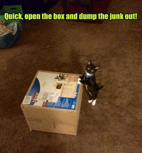 box kitten if i fits i sits Cats - 8392320768