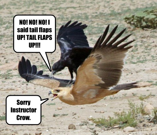 Funny bird meme of two birds flying with the crow riding the bird and text around the image to imply that this is a bird teaching another how to fly.
