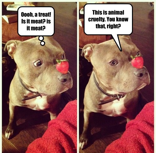 dogs,treat,strawberry,pit bull,cruel