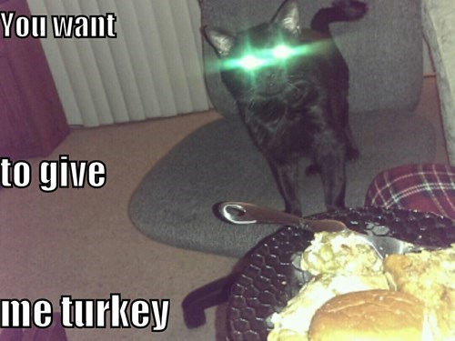 Turkey laser eyes mind control Cats black cat - 8392697344