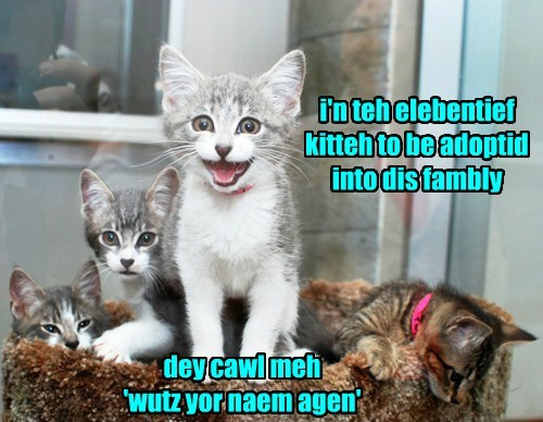 adopted Cats - 8392848384