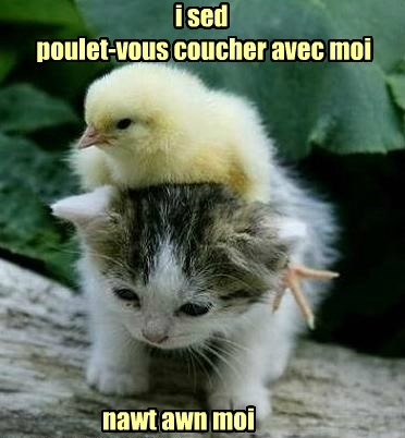 chicken kitten squee - 8392952064
