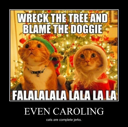 christmas dogs jerks Cats funny - 8392973056