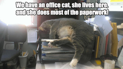 office supplies work paperwork Cats