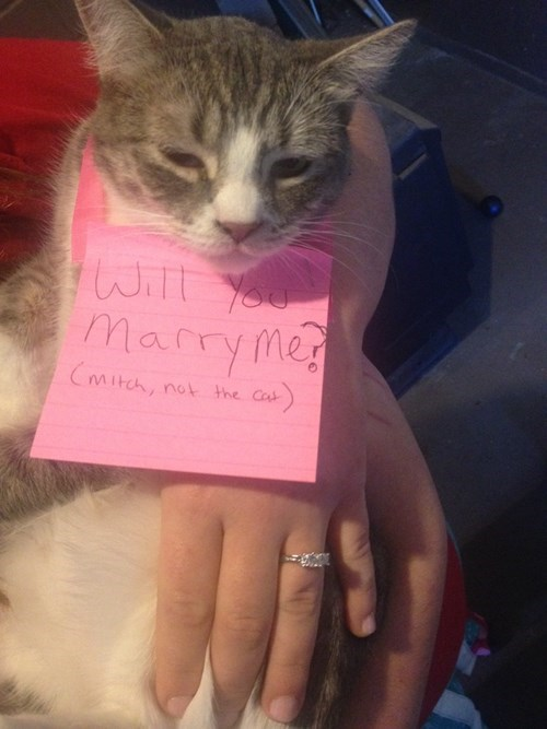 Cat - Marry me CMitch, not the Ca