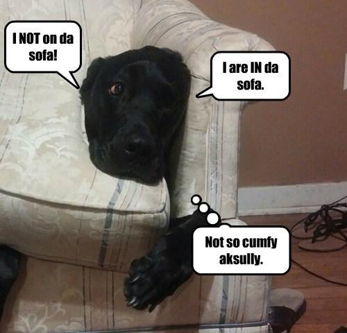 dogs loophole Black Lab sofa - 8393195008
