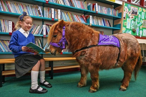 service animals therapy pony cute