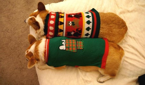 christmas,dogs,cute,sweater,corgis
