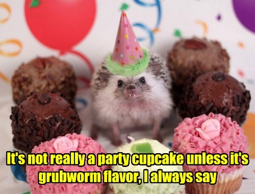 gross,cupcake,Party,hedgehog,noms