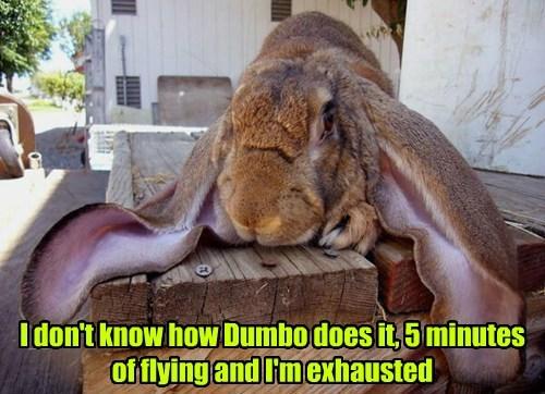 birds dumbo flying rabbit - 8393584640