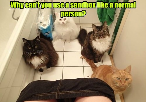 litterbox humans bathroom mystery Cats