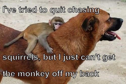animals dogs literal monkey squirrel - 8393748224