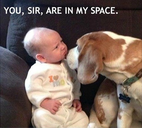 dogs baby cute parenting - 8393867008