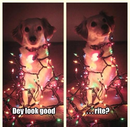 christmas dogs lights - 8393870080