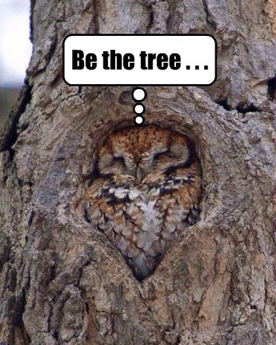 nature Owl one tree - 8393889536