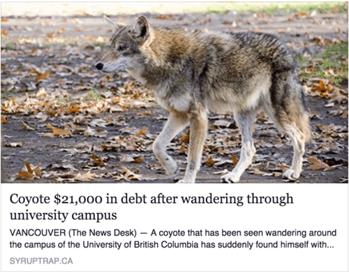 student loans,coyote,funny,college,g rated,School of FAIL