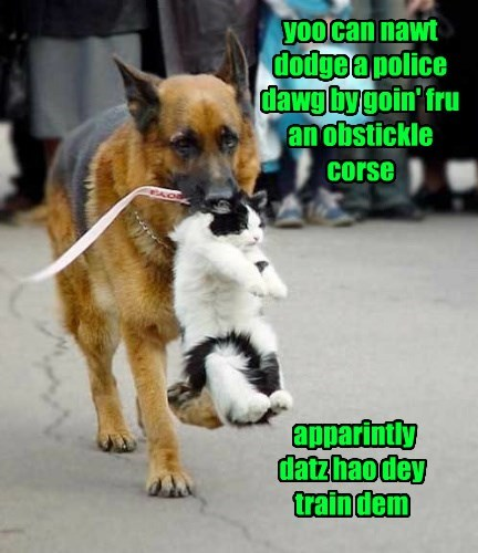 yoo can nawt dodge a police dawg by goin' fru an obstickle corse apparintly datz hao dey train dem