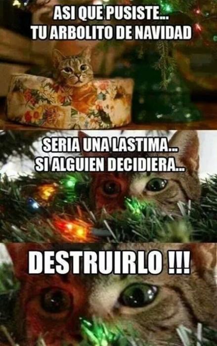 gatos bromas Memes animales - 8394106624