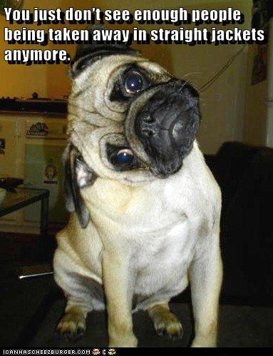 animals crazy dogs pug - 8394137088