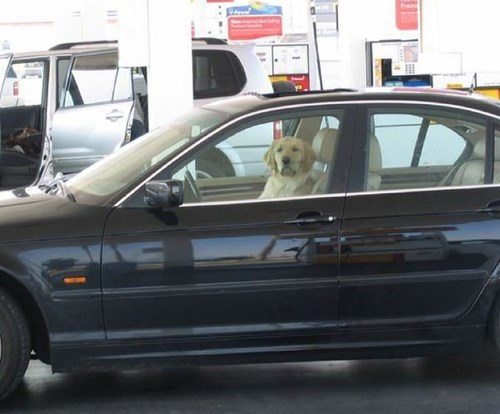 car,dogs,gas