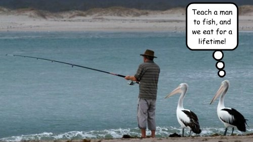 birds,fish,fisherman,teach