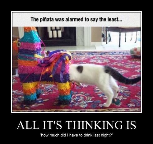 pinata Cats funny - 8394348544