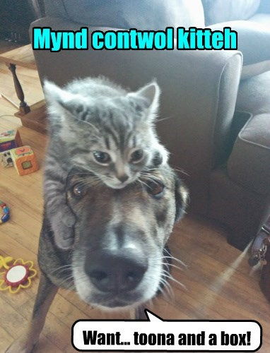 Cats,dogs,mind control,world domination