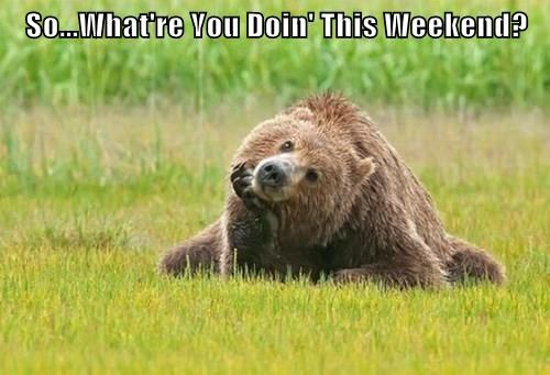 bear,what are you doing,weekend