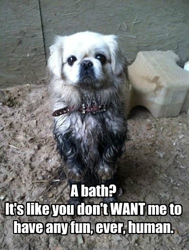 bath,dogs,mud,why