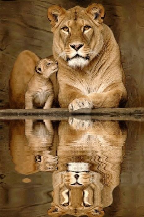 cub cute lion - 8394662912