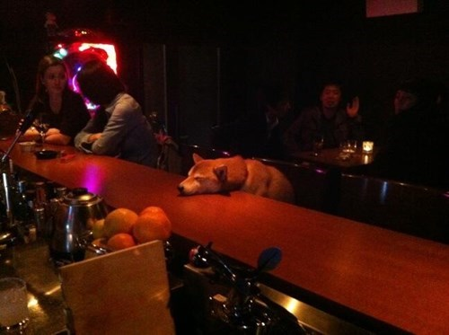 dogs,drunk,passed out,funny,after 12