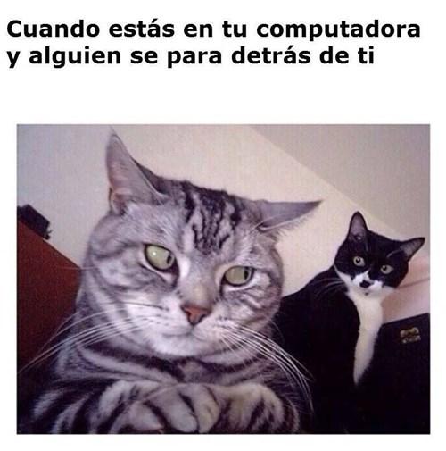 gatos bromas Memes animales - 8394829824