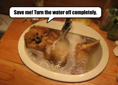 pomeranian dogs bath - 8394849024